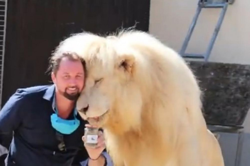 Da li biste kupili teglicu lavljeg izmeta za 5 evra - kažu vredi svake pare!?