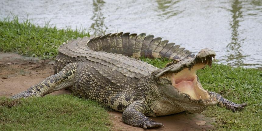 Opšta uzbuna zbog krokodila koji su pobjegli sa farme!