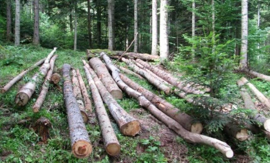 Ustavni sud: Šume nisu u vlasništvu Republike Srpske